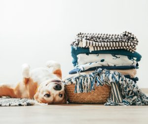 eliminate pet odors in clothing